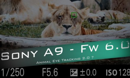 Sony A9 : Animal Eye – Quel progrès face au A7 III ?